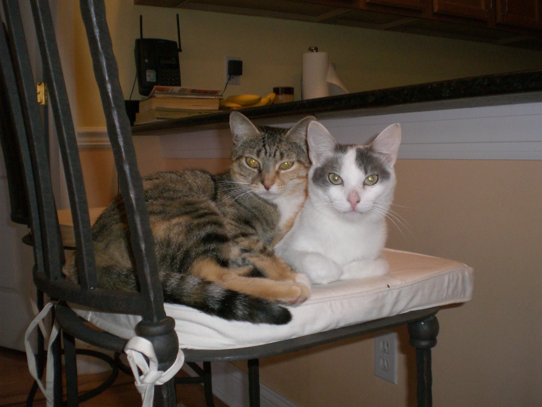 Soul sisters Mesa (l) and Pashmina (r)